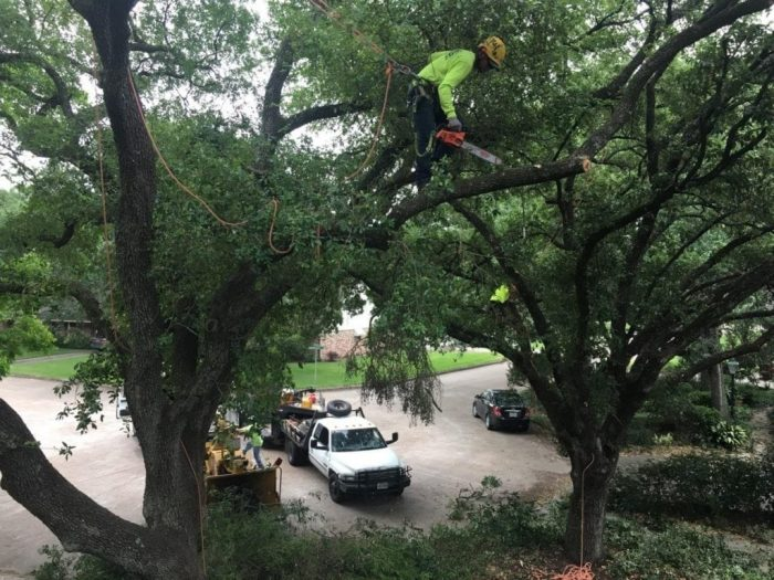 Impact-of-Tree-Removal