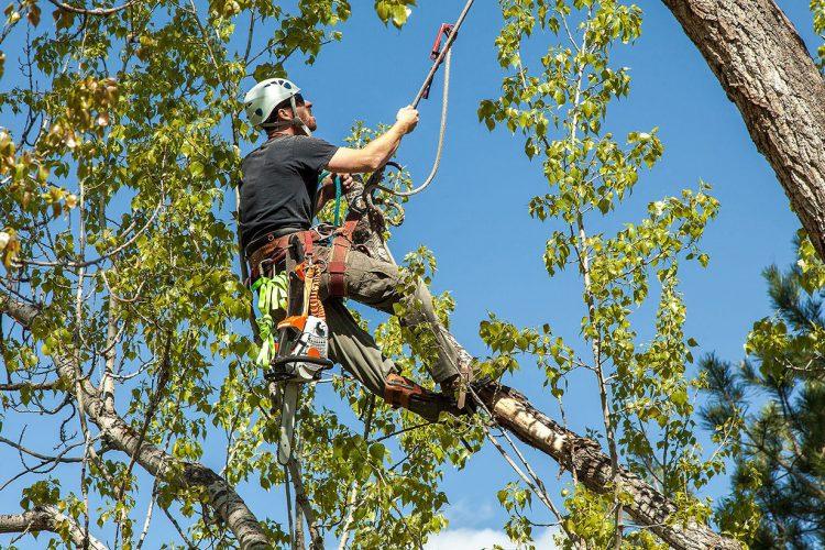 davey tree service near me