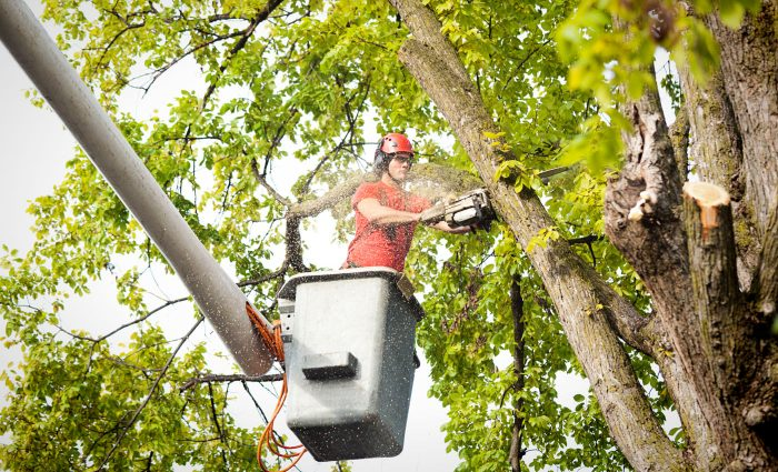 davey tree service reviews